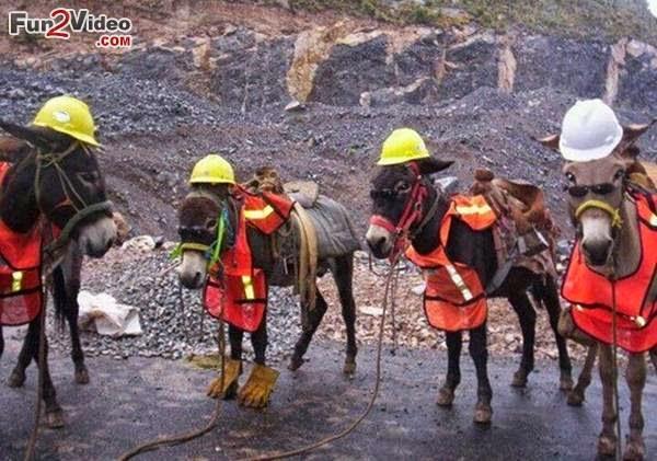 civil-engineer-funny-donkey.jpg