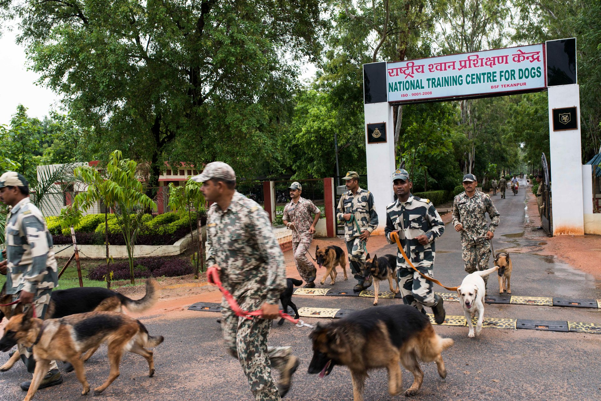 Indian-Dogs14.jpg