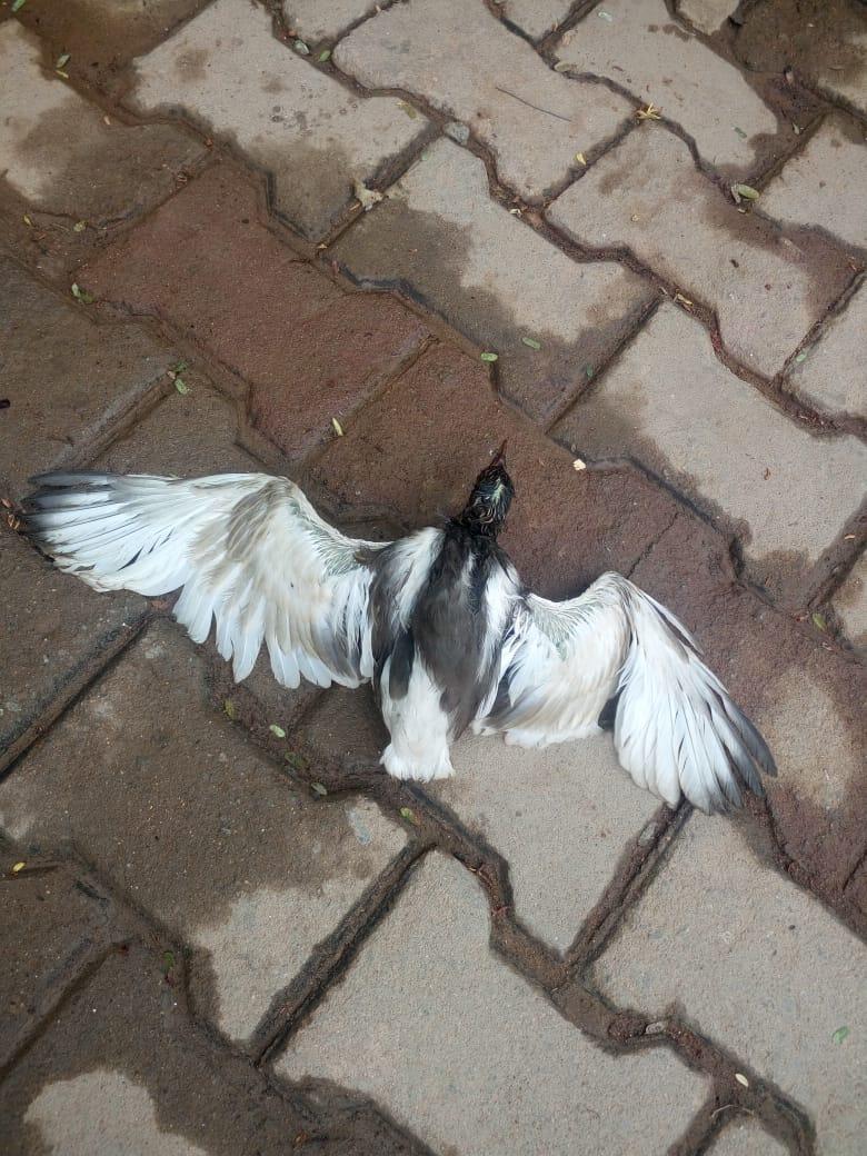 pond-heron.jpeg