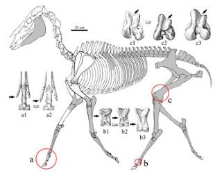 zanda skeleton.jpg